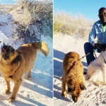 Two photos side-by-side, one with Patricia and one with Bruce, both posing by their dogs on a beach.